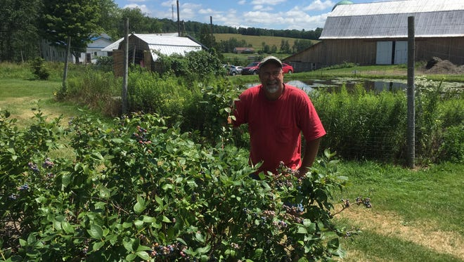 Mark Oakley of Penn-Can Farms, a u-pick raspberry and blueberry orchard, questions the potential impact from a proposed industrial incinerator that could be built in the vacant hillside in the background behind him.