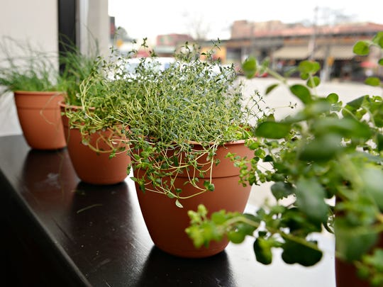 Rare Italian grows herbs inside the restaurant to be used in drinks and as garnishes.