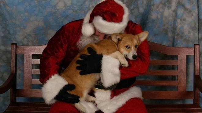 """""""All I want for Christmas, Santa, is my own human!"""""""