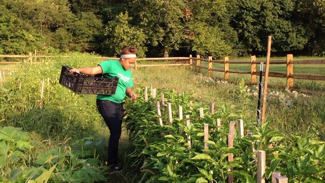 Nataysha Williams, 18, of Wilmington, picks green peppers at the Bright Spot Urban Farm early Wednesday morning. She has been part of the program for ex-foster kids since February.