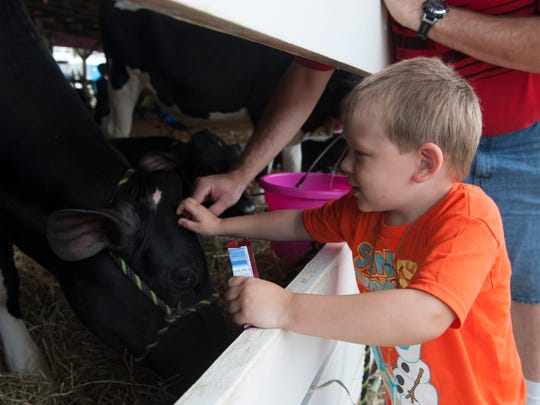 Liam McMahon, 4, of East Greenwich, pets a cow at the Gloucester County 4-H Fair. Thursday, July 24, 2014.