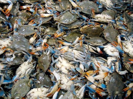 Blue crabs. Photo by nate steiner via Flickr