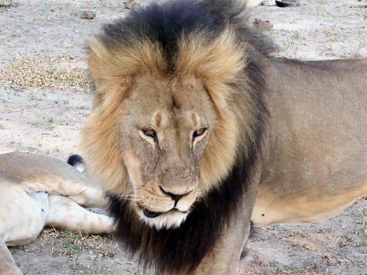zimbabwe lion killed_fran