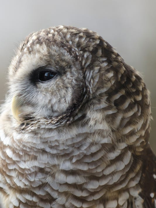 MAN N Owl Fest