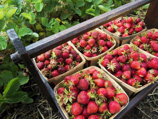 Bonnie Hoffman's berry carrier was used on her family's farm in the 1950s in Manchester. It will get a lot of use for the next month or so as strawberry season is in full swing.