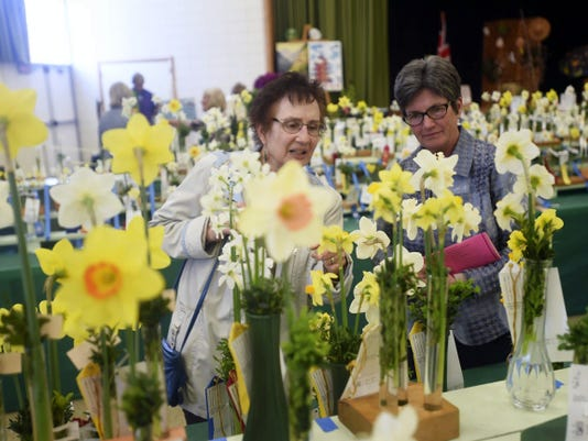"""Ellen Shatzer, left, of St. Thomas and Laura Baker of Chambersburg check out the daffodils at the Chambersburg Garden Club and Tuscarora Daffodil Group's 79th Plant Society Standard Flower Show titled """"Destination: Flowers,"""" on Saturday."""