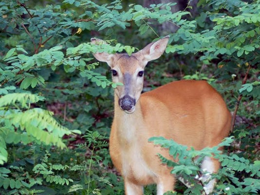 If you want to harvest an antlerless deer this year, you'll need to apply for a license first.