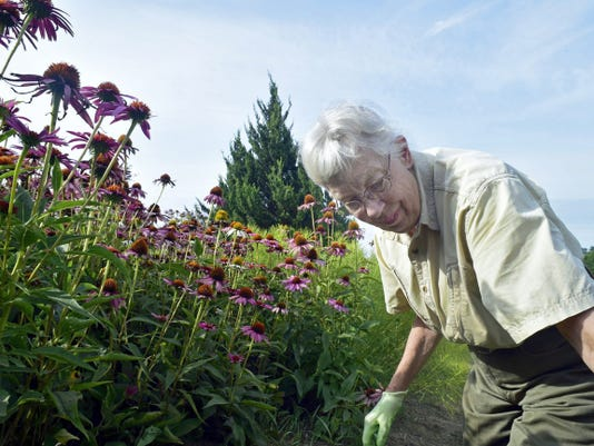Judy Stenger works Aug. 6 in Conococheague Audubon Society's native plant garden at Norlo Park near Fayetteville.