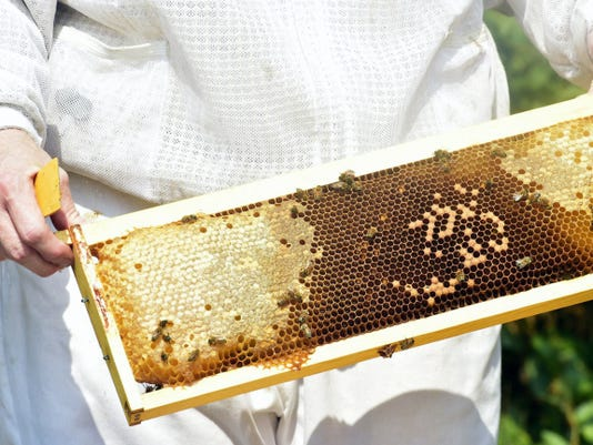 Honey can be seen at a bee hive Friday in the Waynesboro area.