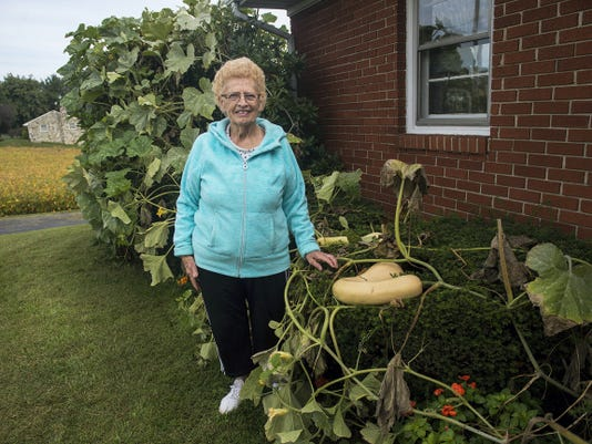 Janet Frock, 79, stands next to the pumpkin vine outside of her home on Old Westminster Road on Tuesday. Frock estimates the stalks hold eight to ten pumpkins, which she plans to use for pies.