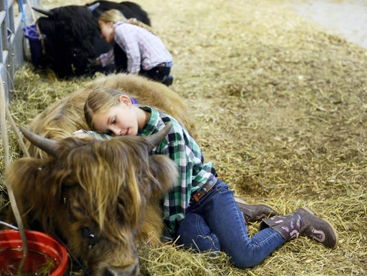 Eva Lunn, 9, front, of Hanover, lays on her bull, Apple Hill Dougal while her sister, Carys Lunn, 6, lays on Apple Hill Collum during the last day of the York Fair Sunday.