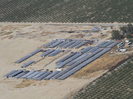 """Pictured is an aerial view of the Delano-based compound that sheriff deputies raided Thursday morning. The compound was lined with more than 49 """"nursery-style"""" green houses filled with marijuana plants."""