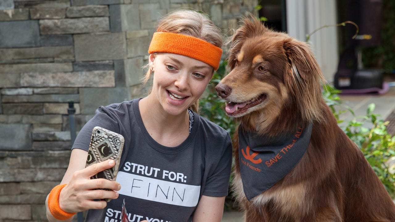 Animal Society ambassador Amanda Seyfried walks her Australian shepherd Finn to raise awareness to the fact that more than 9,000 dogs and cats are killed in shelters each day.