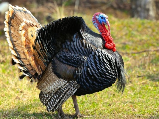 A stock image of a turkey.