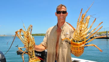 """Scott Lattimer of Satellite Beach shows off two of the nine lobsters they caught Wednesday morning. He went out with Spence Wise on the """"Too Wise""""  at about 6:00 a.m., out of Port Canaveral, and they were the first ones back in port at about 12:30 p.m.,  FWC was at the boat ramp checking all the returning boaters for limits.  Lattimer said they saw lots of lion fish  while diving."""