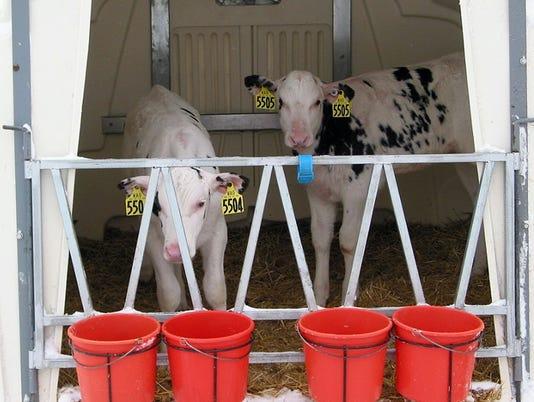 WSF 0223 Dan calf care 2