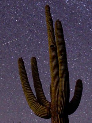 A meteor can be seen behind a saguaro cactus near the First Water Trail in a 30 second exposure on Aug. 13, 2010.