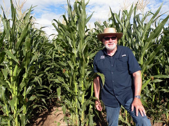 Rich Pratt, director of the New Mexico State University Cropping Systems Research Innovation Program, stands near rows of corn at the NMSU Student Research and Education Gardens. Pratt was recently selected at as the prestigious Crop Science Society of America Fellow, the highest recognition bestowed by the CSSA.