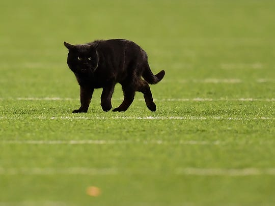 A black cat runs on the field during the second quarter of the New York Giants and Dallas Cowboys game at MetLife Stadium on Monday in East Rutherford, New Jersey.