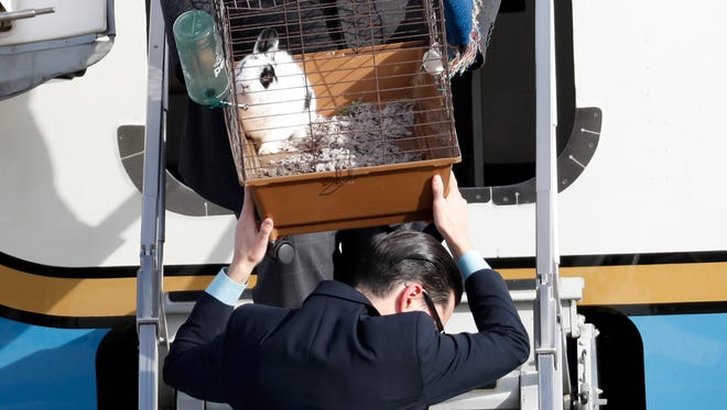 """Pet rabbit """"Marlon Bundo,"""" is carried off the plane of Vice president-elect Mike Pence as he arrives with his wife Karen Pence and daughter Charlotte Pence, at Andrews Air Force Base, Md., Monday, Jan. 9, 2017. (AP Photo/Alex Brandon)"""