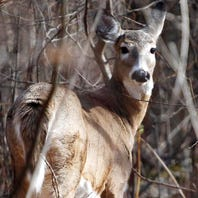 Kits to detect chronic wasting disease in Michigan deer in short supply