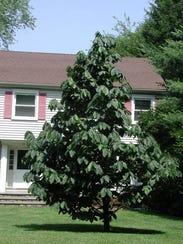 -Gardening_Fruit_Trees_NYLS430.jpg_20090413.jpg