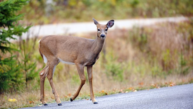 The state issues permits for hunters to harvest antlerless (mostly female) deer to keep populations in check.