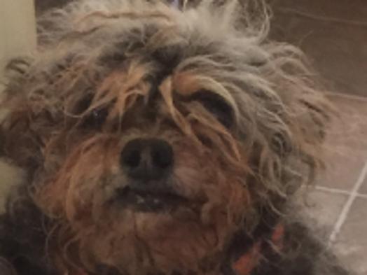 Dog Born Blind In One Eye