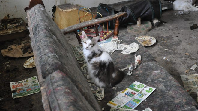 Dozens of cats were rescued from a residence in Oconto County.