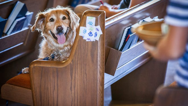 A dog watches as the collection plate makes its way down the aisle during the Saint Andrew Presbyterian Church's Blessing of the Animals service in 2015.
