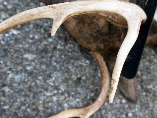 YDR-antlers