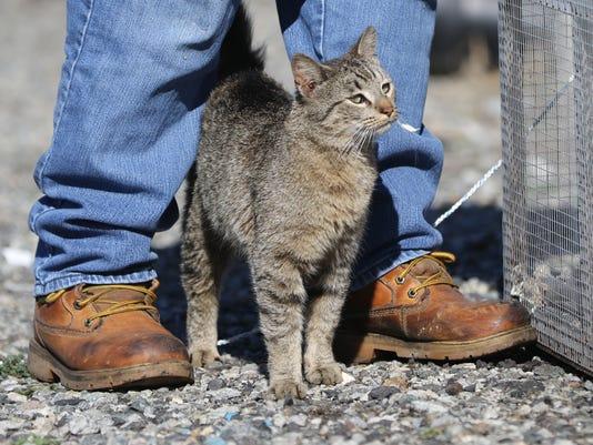 Cat Trapper