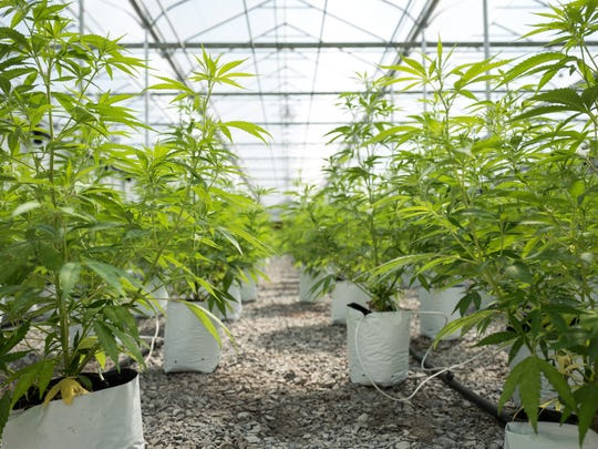 FILE - Effort to rezone Cathedral City land stalls over concerns about potential pot facilities.