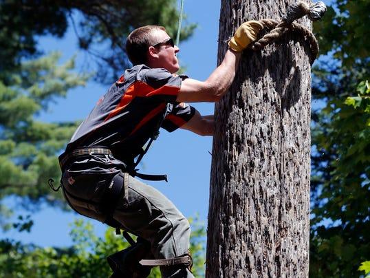 AP Lumberjack School