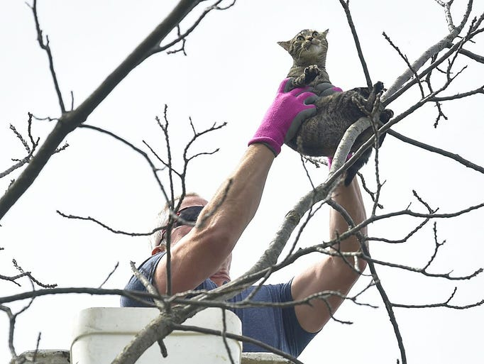 Resistance is futile: A cat is lifted from its precarious