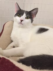 Savannah is a sweet girl who is growing up in a shelter.