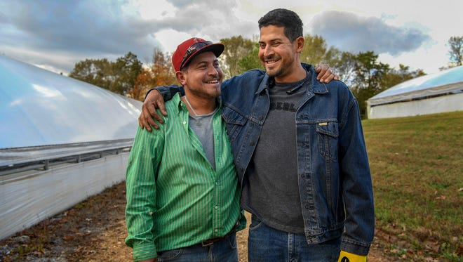 Brother Jhony, left and Erick Aguila pose for a portrait between greenhouses on the Hancock farm in Bumpus Mills, Tenn., Tuesday, Oct. 24, 2017.
