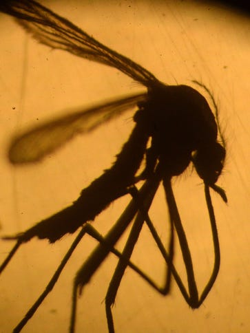 The Zika virus is transmitted by mosquito.