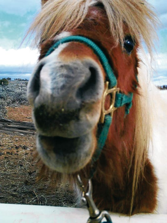 Cochise is a pony that received assistance from The Equine Protection Fund, a program stemming from the Animal Protection of New Mexico organization, which brings awareness of the plight of abused and stray horses.