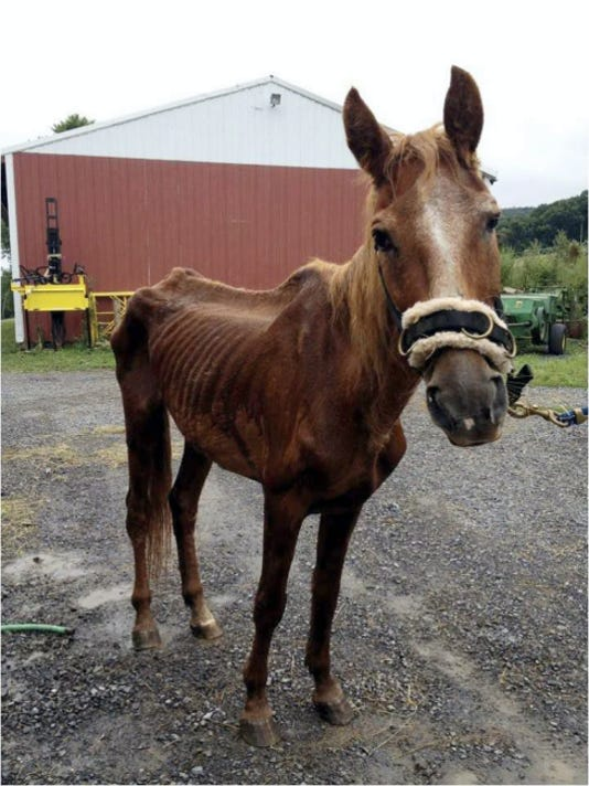 Cordelia, an abused 22-year-old mare that died in Bedford County, was the inspiration for including horses in Pennsylvania's humane law that currently protects only dogs and cats.