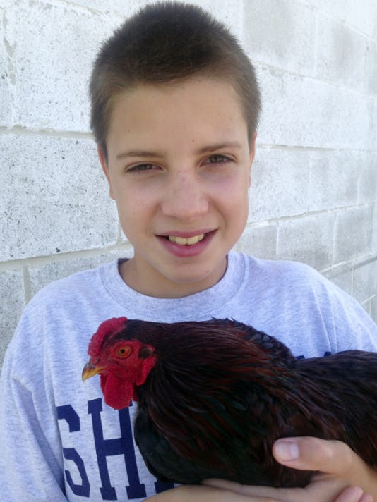 Thirteen-year-old Andrew Rheam and his rooster Walter, a young partridge Wyandotte, plan to participate in the poultry show at the Franklin County Fair. Due to concerns about avian flu, the birds will compete via photos only.