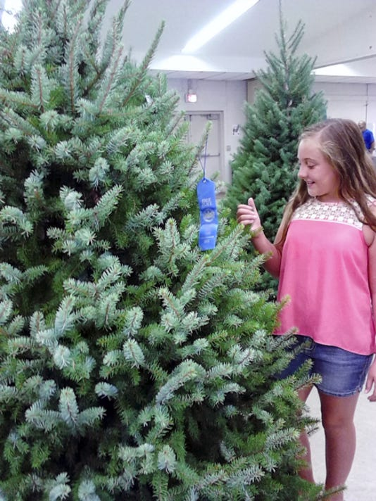 Lauren Jeffries, 10, of Annville, admires Christmas trees Friday at the Lebanon Area Fair. The fair closes tonight with a demolition derby and fireworks.