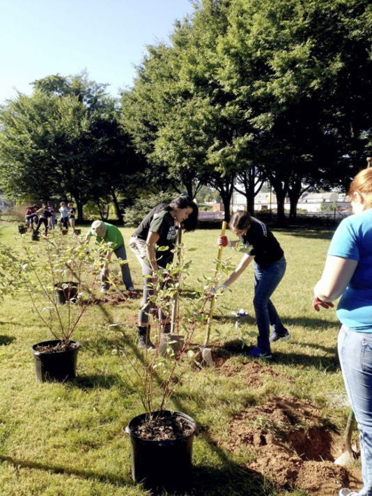 In this file photo from 2014, York College students volunteered to plant Red Twig Dogwoods and Mock Orange bushes along the fence line between King and Princess streets on the York County Heritage Rail Trail.