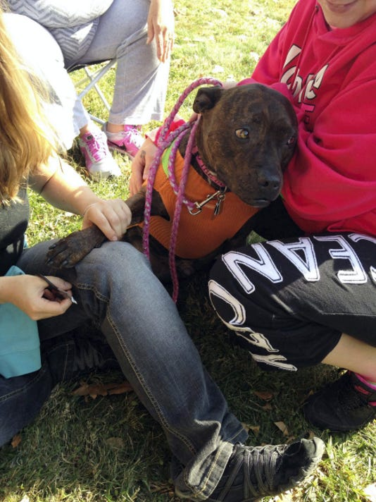 PUBLIC OPINION — FILE Jasmine, a 7-year-old pit bull, gets her nails clipped by Tara Jensen, owner of Willowbrook Pet Retreat and Spa, during the Doggie Fall Fest hosted Saturday, Oct. 25, 2014, by Knick Knack Pittie Pack. Nail-clipping will once again be offered this year.