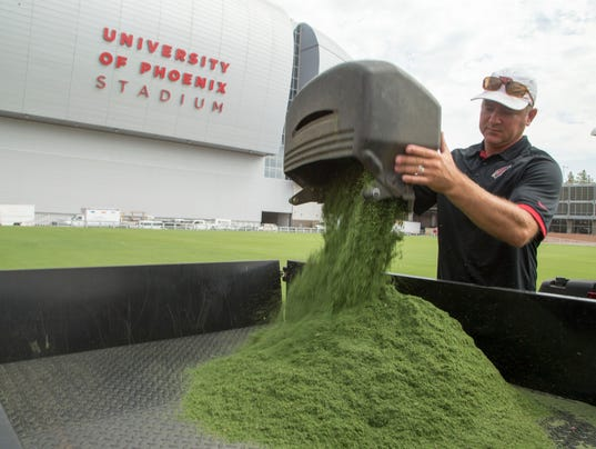 University of Phoenix Stadium turf