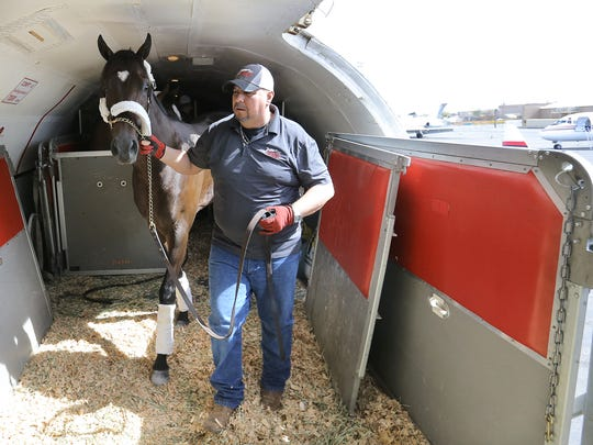 Seven Trumpets, trained by Dale Romans, arrives in El Paso Wednesday. Seven Trumpets will run in the Sunland Derby Sunday.