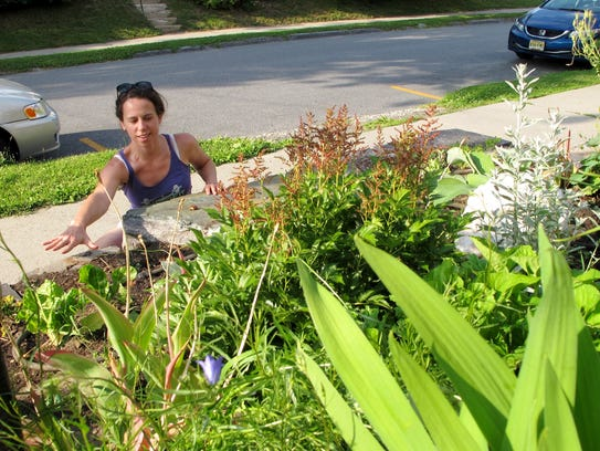 Emily Lee indicates where plant thieves plundered her