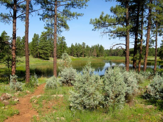 Woodland Lake Park is a swath of open space in the middle of Pinetop-Lakeside with miles of trails, meadows and forests.