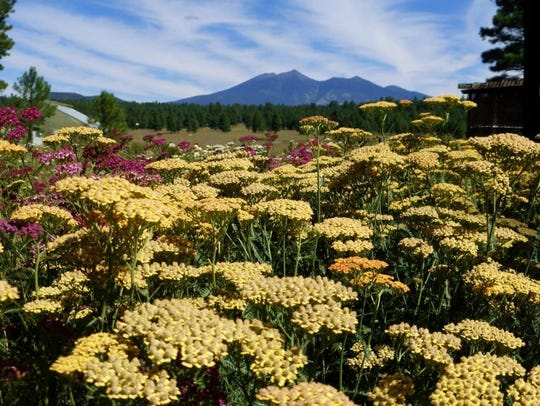 The Arboretum of Flagstaff is a botanical garden, nature