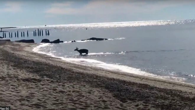 Image from video provided by Allyson Baldwin